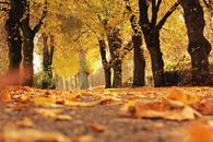 Thumbnail for 5 Reasons to Explore Zagreb during Autumn